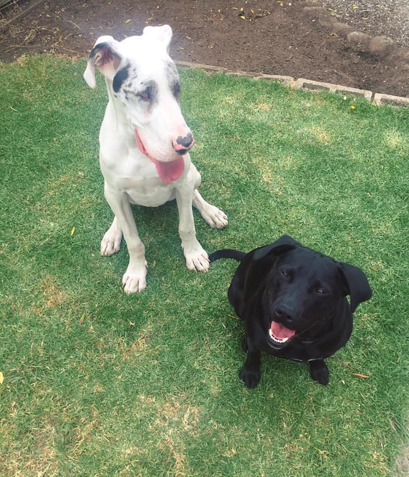 Dogs Home Geelong